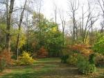 Christine's backyard - Fall 2010