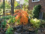 Christine's Garden with Japanese Maple - Fall 2010