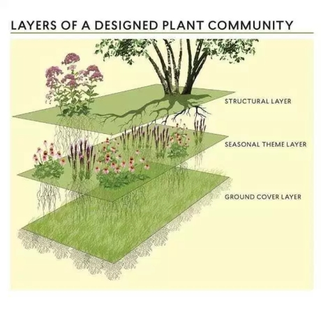 layers in Designed Plant Community