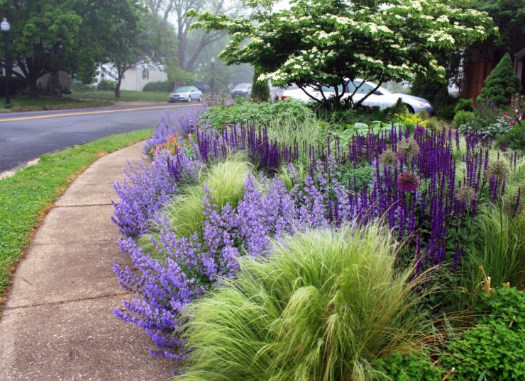 perennials-sidewalk-path-hell-strip-thomas-rainer-1466x1066