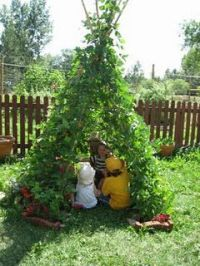 bean-plant-tent