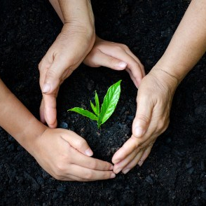 seedling hands
