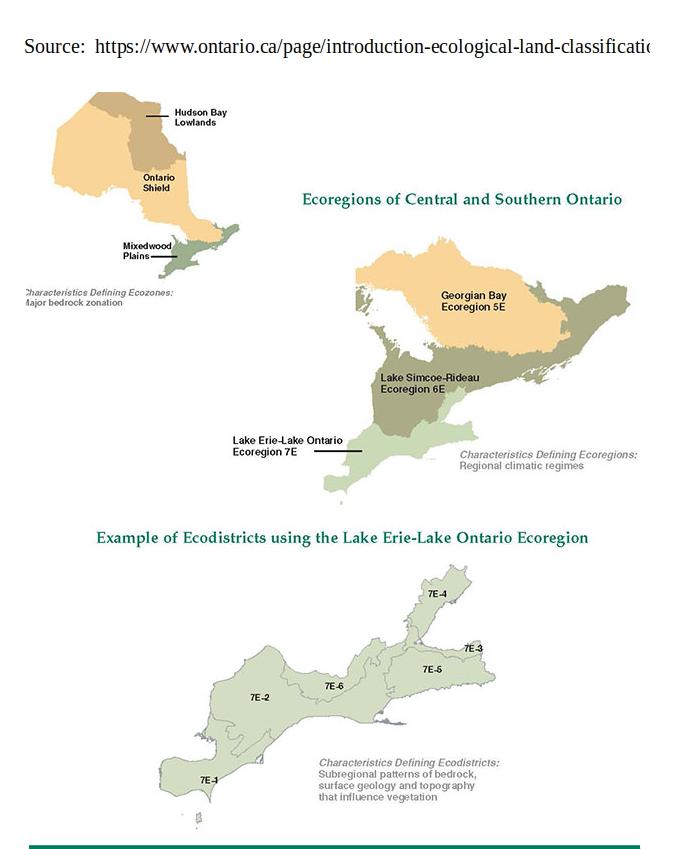 graphic of Ontario ecozones and ecoregions